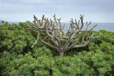 Lan4112-Rośliny napolach lawowych