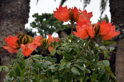 Lan4150-Kwiaty wJameos del Agua