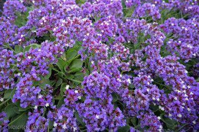 Lan4152-Kwiaty wJameos del Agua