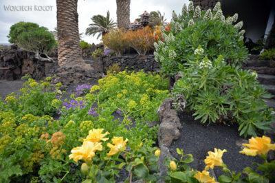 Lan4155-Kwiaty wJameos del Agua