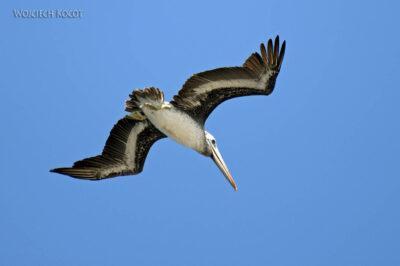 PBc051-Ptactwo naLas Ballestas