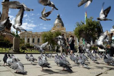 PBi103-La Paz-przy Plaza Murillo