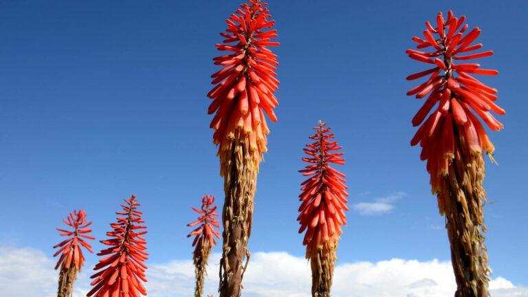 PBo103-Kwiatki bogate w nektar