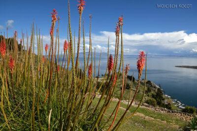 PBo106-Kwiatki bogate wnektar