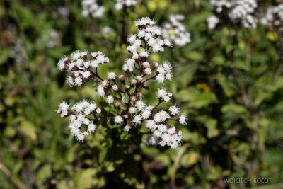 PBq096-Kwiatuchy
