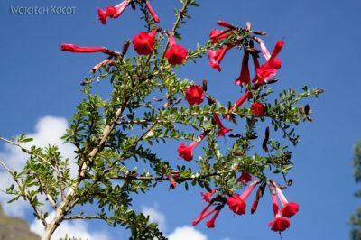 PBs011-Kwiatuchy