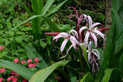 PBt146-Kwiatuchy