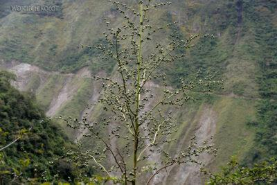 PBt160-Roślina jak agawa