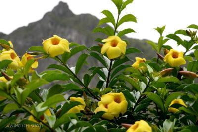 PBu161-Kwiatuchy