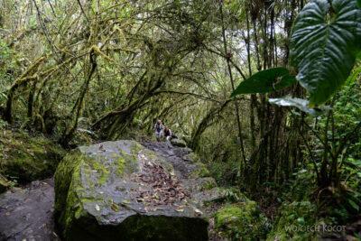 PBw087-W drodze naszczyt Machu Picchu