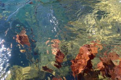 GTf030-Podwodny świat Jeziora Zimnego