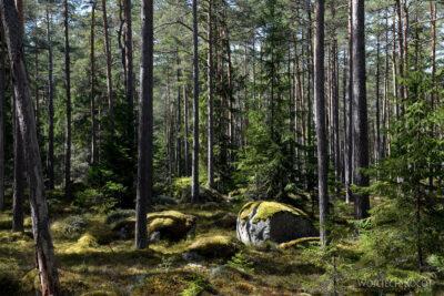 BałtG080-Park Lahemaa-Kasmu