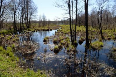 BałtK100-Mokradła podrodze doKłajpedy