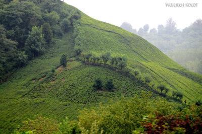 Irnd011-Pole herbaciane