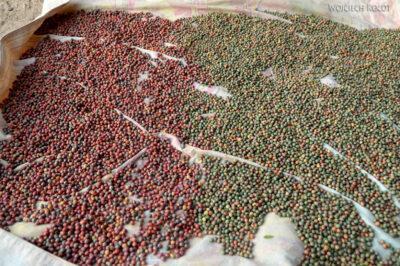 Irni077-Orzeszki pistacji górskiej