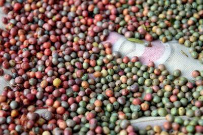 Irni078-Orzeszki pistacji górskiej