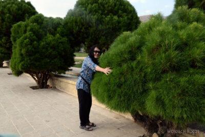 Irnn208-Shiraz-Eram Botanical