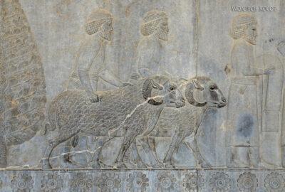Irnp054-Persepolis