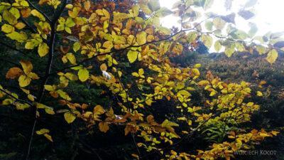 04-Jesień wGorcach