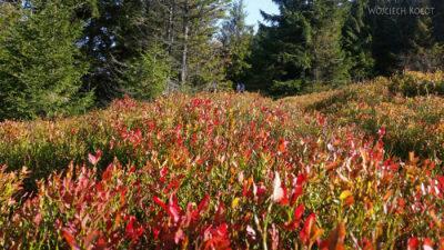 15-Jesień wGorcach