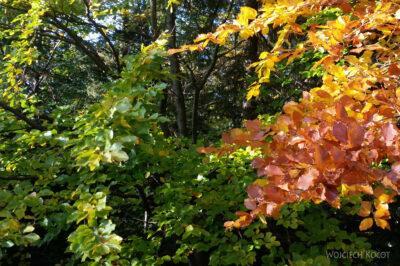 35-Jesień wGorcach