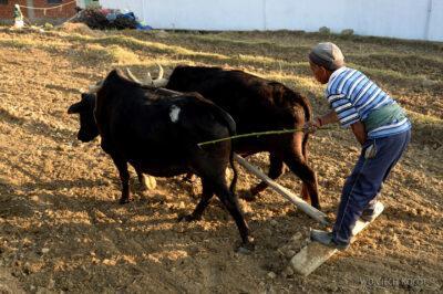 H009-Bir - uprawa ryżu