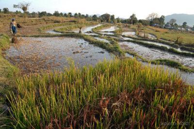 H012-Bir - uprawa ryżu