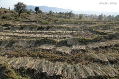 H025-Bir - uprawa ryżu
