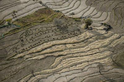 H028-Bir - uprawa ryżu