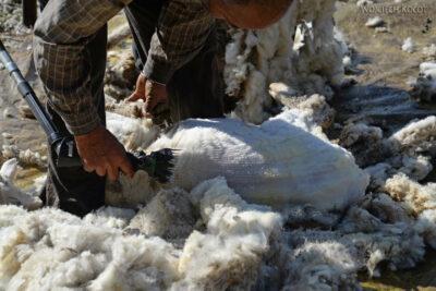 J009-Bir - strzyżenie owiec