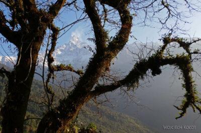 Poh025-Treking naMardi Himal