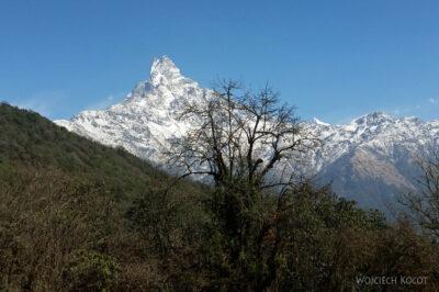Poh040-Treking naMardi Himal