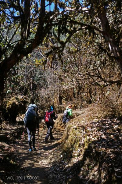 Poh044-Treking naMardi Himal