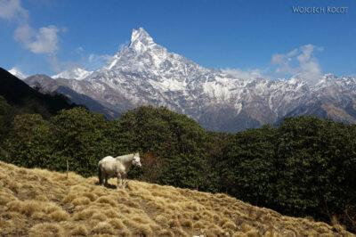 Poh065-Treking naMardi Himal