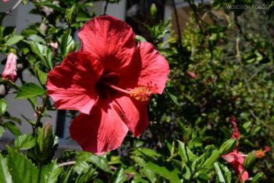 Syb094-Taormina-w Comunale Garden