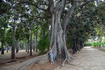 Syi330-Palermo-W Parku Miejskim