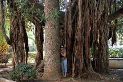 Syn165-Syrakuzy-Ogród Aretuzy