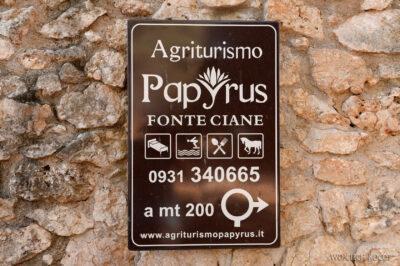 Syo003-Przy papirusach