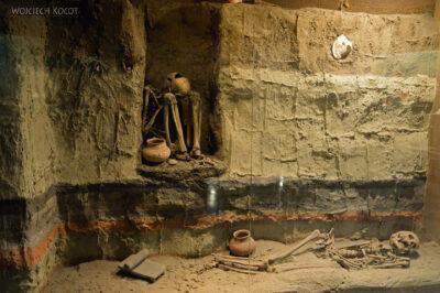 c196-Muzeum Antropologiczne