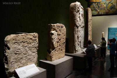 c214-Muzeum Antropologiczne