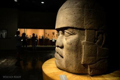 c285-Muzeum Antropologiczne