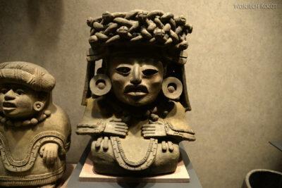 c313-Muzeum Antropologiczne