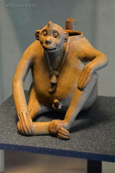 c436-Muzeum Antropologiczne
