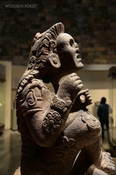 c490-Muzeum Antropologiczne