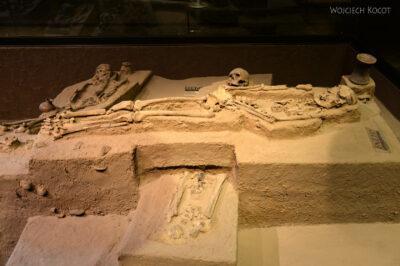 c616-Muzeum Antropologiczne
