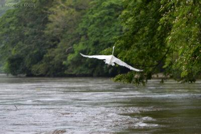 d015-Rejs kenionem Grijalva River