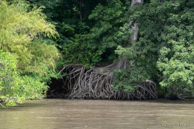 d088-Rejs kenionem Grijalva River