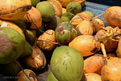 j090-kokos dopicia