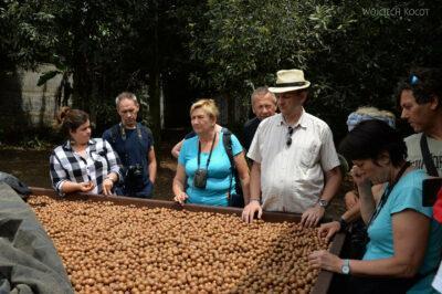 j109-Na plantacji orzechów makadamowych