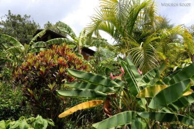 j116-Ogród naplantacji orzechów makadamowych